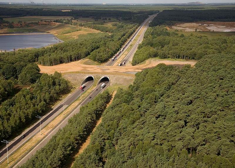 Пешеходные мосты для животных  - и почему у нас таких нет?....