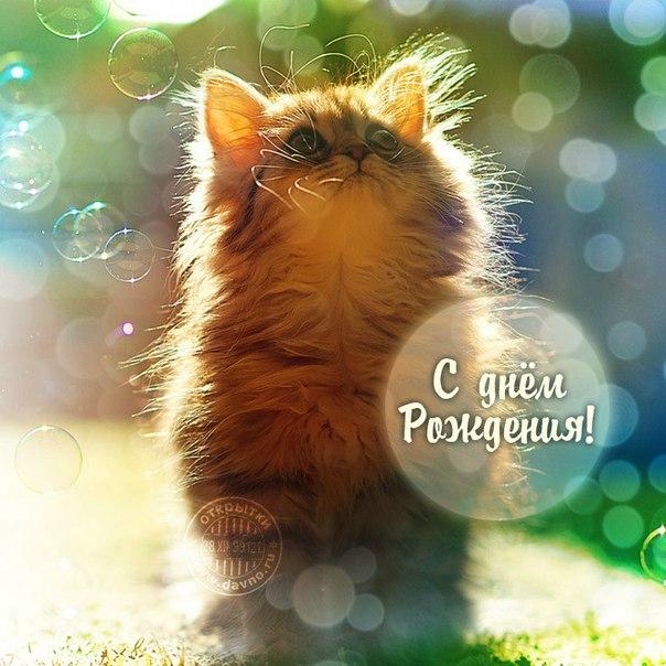 Котенок с поздравлением