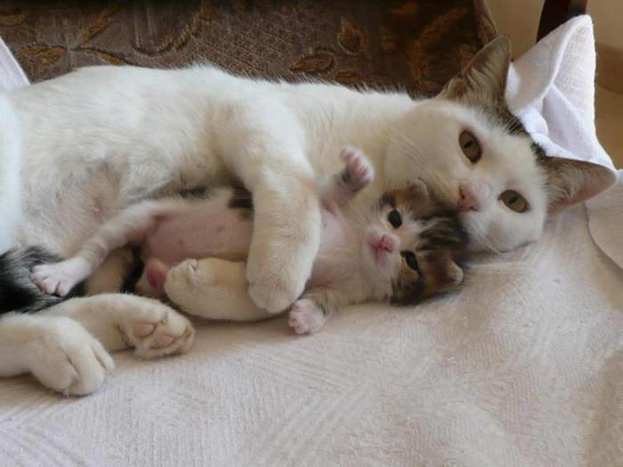16. В маминых объятиях котенок, кошка