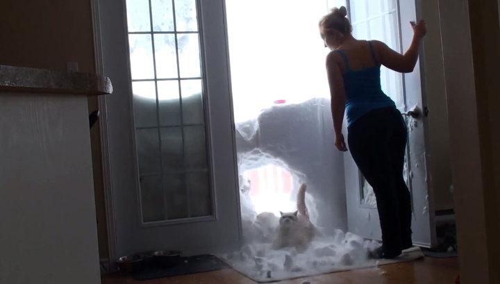 Голодный кот, прорвавшийся сквозь снежную стену, стал звездой YouTube