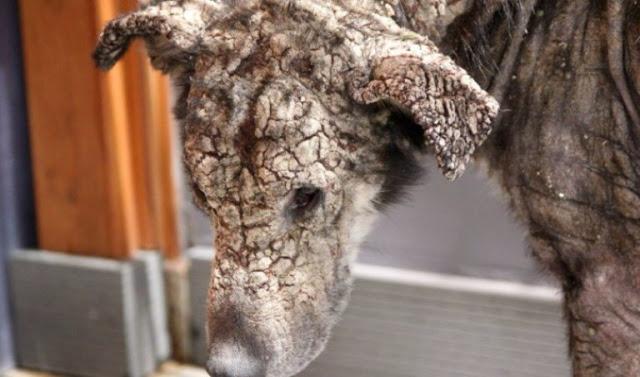 Эта несчастная окаменевшая собака никогда не думала, что ее кто-то полюбит. История дворняжки.