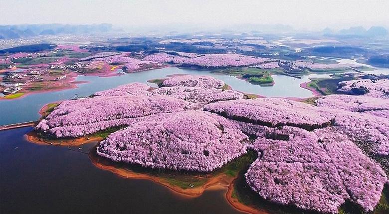 В Китае расцвели вишни и это, пожалуй, одно из самых прекрасных зрелищ на планете
