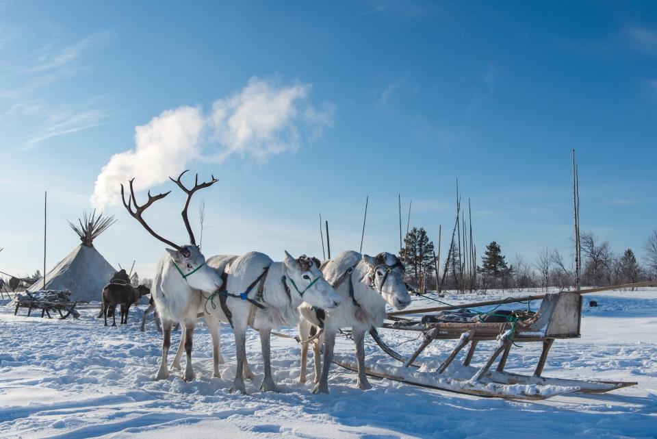 Ненецкая оленегонка: пост восхищения