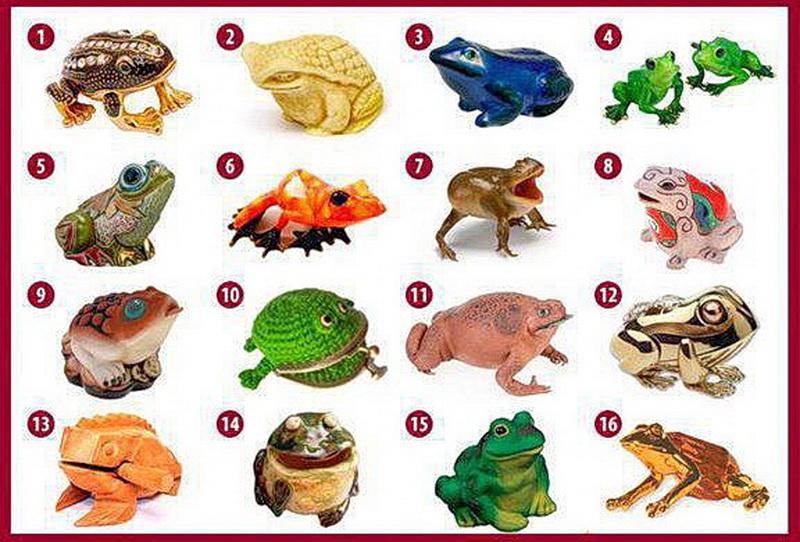 Выбери лягушку и узнай свой путь к  богатству! (Забавно)