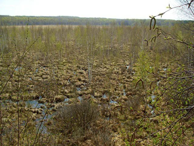 Большое моховое болото 7 загадок Урала, загадки природы