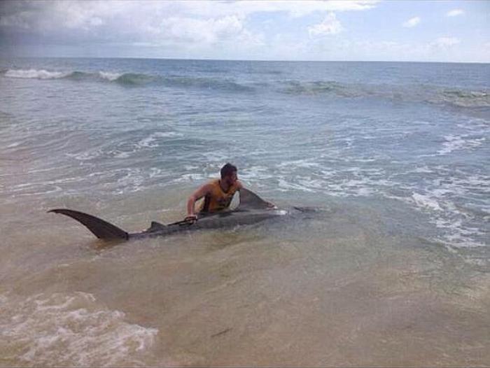 19-летний австралиец поймал 4-метровую тигровую акулу рыбалка, улов