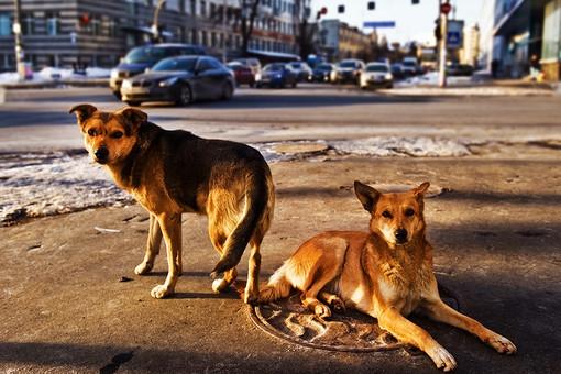 День зачистки от собак догхантеры, охота мля