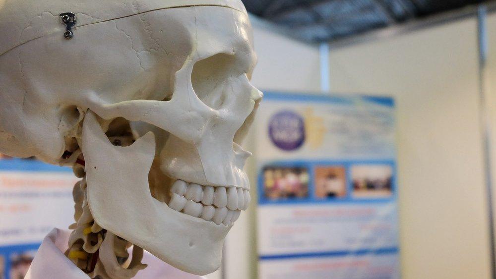 Кости женщин могут повысить свою прочность с помощью клеток мозга