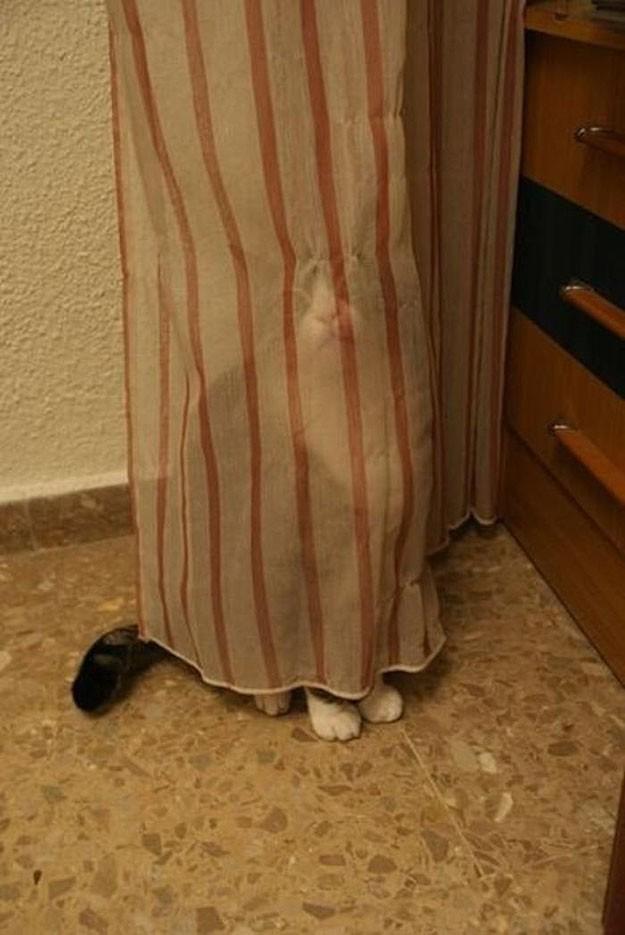 lolcats75 100 лучших фотографий кошек всех времен и народов