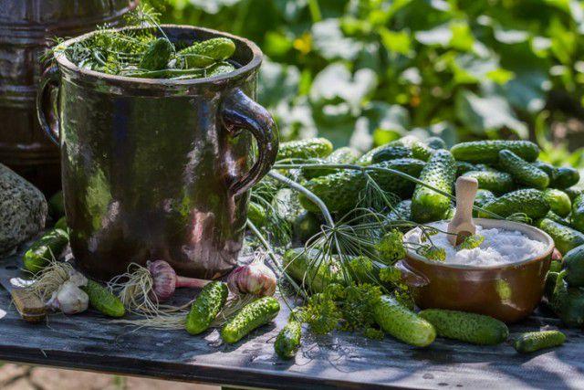 История соленого огурца огурец, закуска, интересное