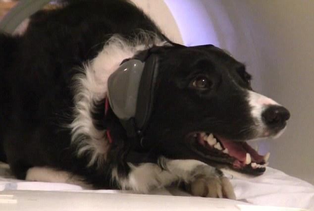 Исследование: собаки чувствуют вашу боль