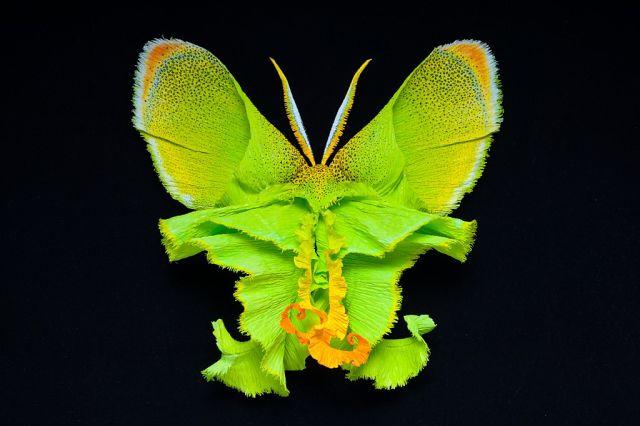 Красота!Рукотворные бабочки из природных материалов!