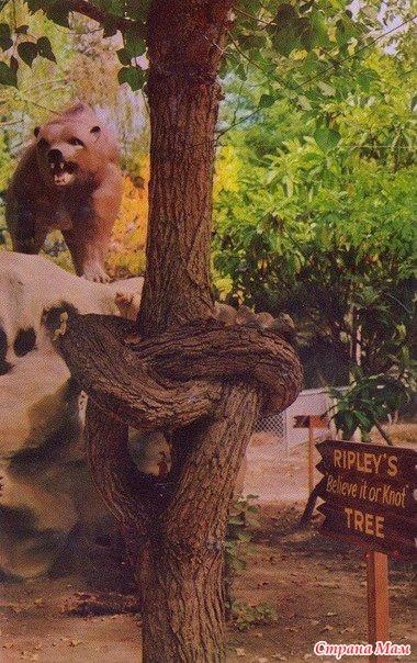 Алекс Эрландсон и его необычные деревья...