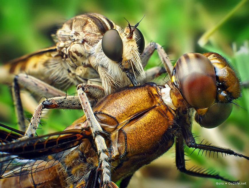 25 макро фотографий насекомых крупным планом. Часть 1