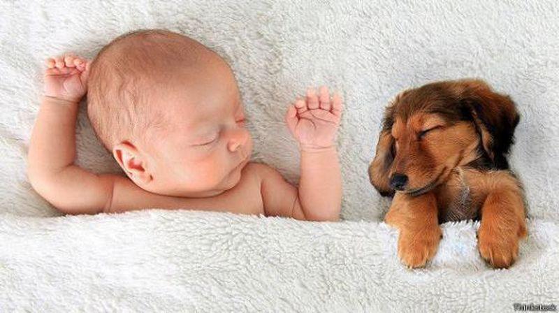 Почему мы так любим домашних животных?