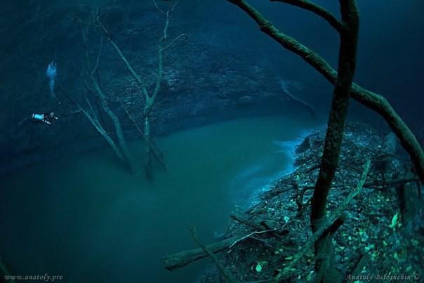 Река которая течет под водой! дайвинг, мексика, река, фото