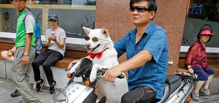 Почему корейцы боятся кошек и едят собак