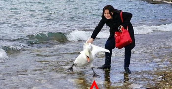 Эта женщина решила сделать фотографию с лебедем. Вот к чему это привело...