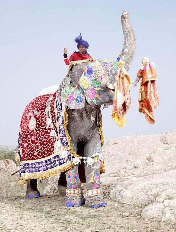 Слоновий тюнинг: индийский фестиваль раскрашенных слонов в Джайпуре