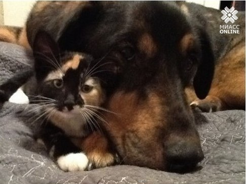 Дружба кошки и собаки – без слёз не читается.