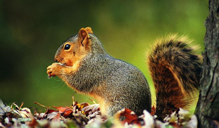 осень и животные 12 (700x410, 441Kb)