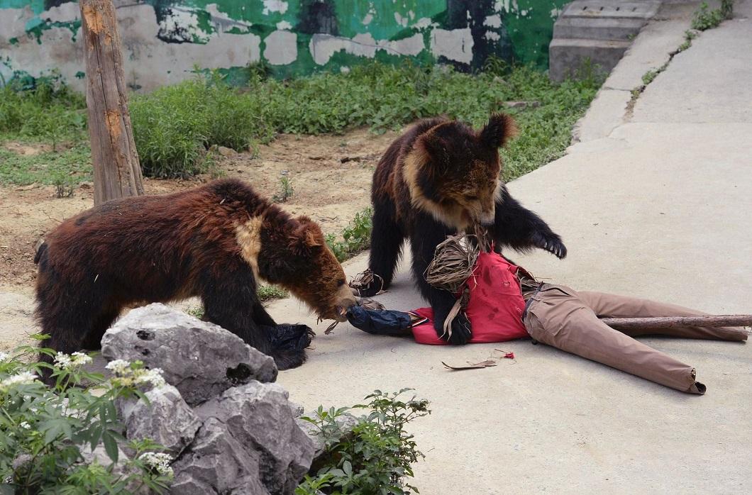 К чему снится медведь нападает на собаку
