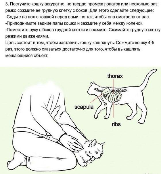 Как спасти своего питомца до приезда ветеринара