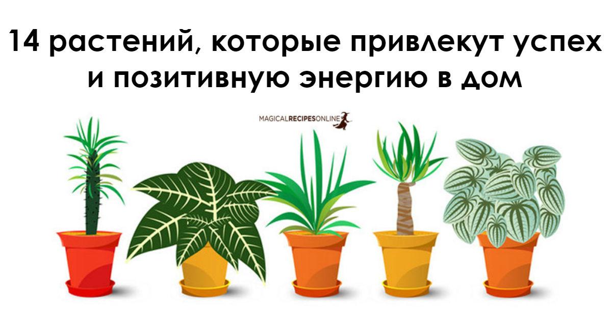 14 растений, которые лучше в…