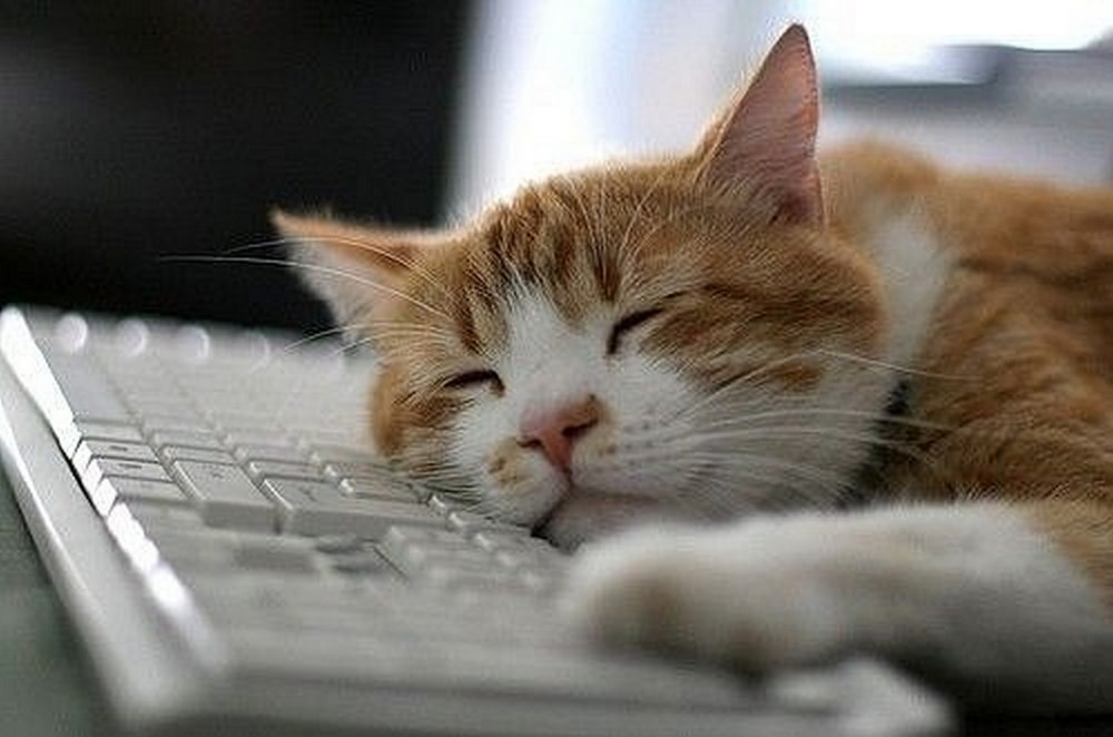 Очень наглый кот!