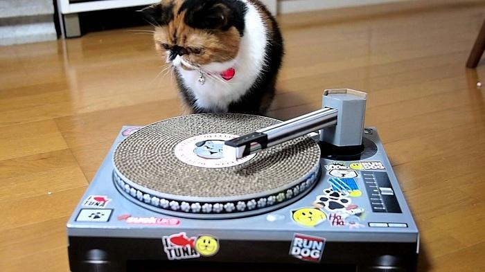 Кошки захватывают мир людей!))