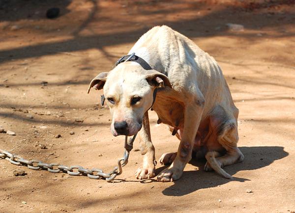 Эту раненную собаку бросили умирать... Но появление 12-летнего мальчика полностью изменило ее жизнь!