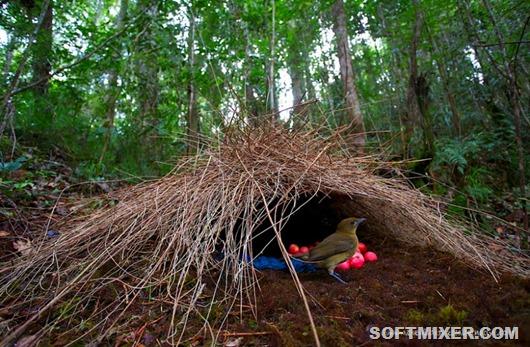 14899310-R3L8T8D-900-animal-architecture-nests-4-1