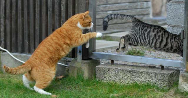 cat_flying_fight_11
