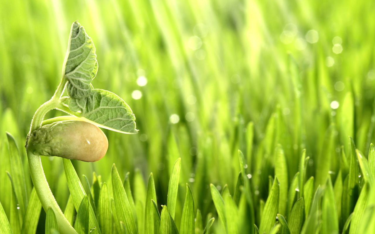 Готовим стимуляторы роста растений своими руками