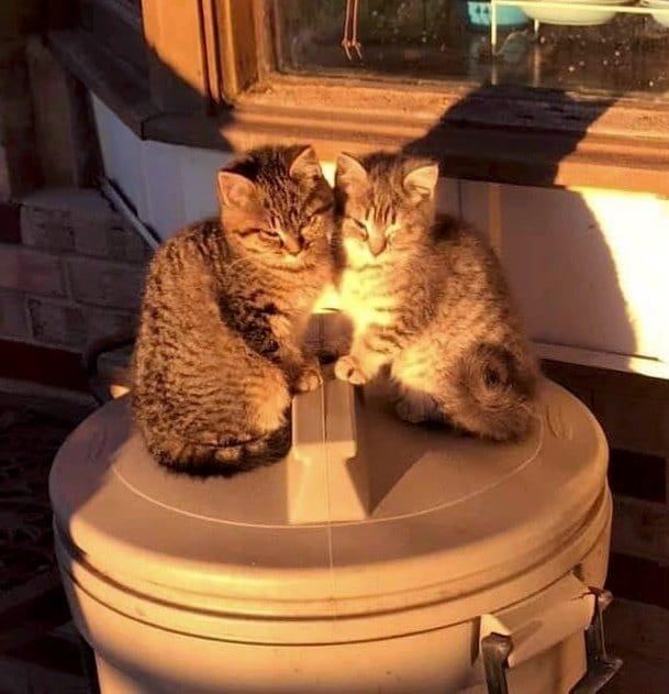 На мусорном ведре сидели два котенка. Они прижимались друг к другу, пытаясь согреться