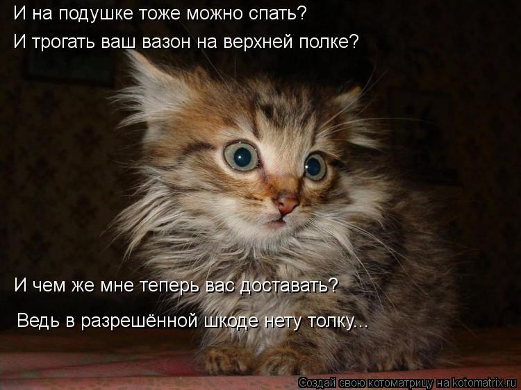 Пятничная котоматрица!