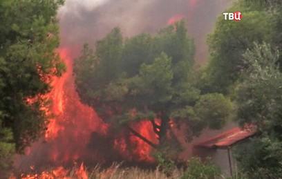 Испанию и Португалию охватили масштабные лесные пожары