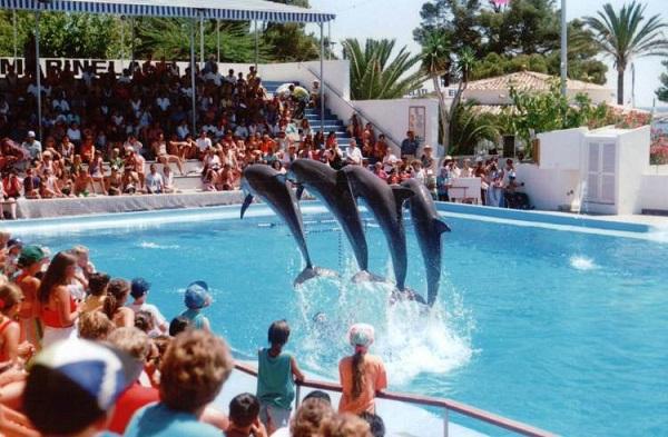 Что творится за кулисами шоу с дельфинами. Шокирующая правда!