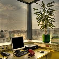 Энергетическое влияние растений по Фен-шуй