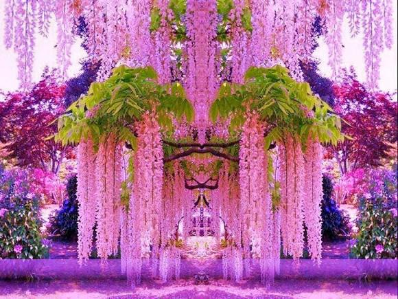 http://asptur.com/wp-content/uploads/2014/03/Kawachi_Fuji_Garden5.jpg