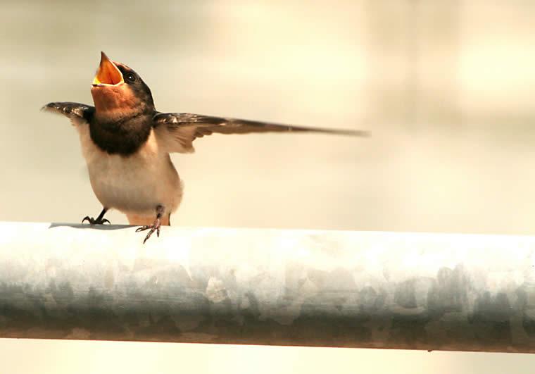 Танцы птиц