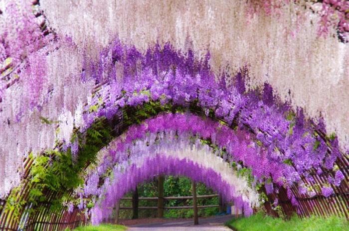 Фото красиво посаженных цветов 20