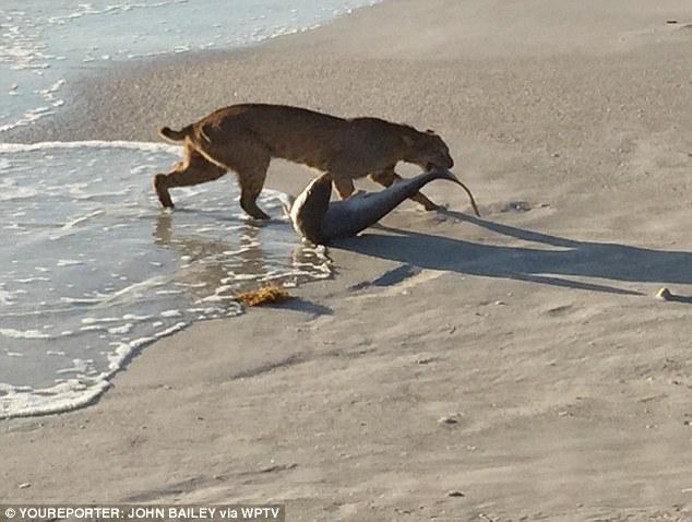 Кошки не любят воду? Они даже ходят на рыбалку!