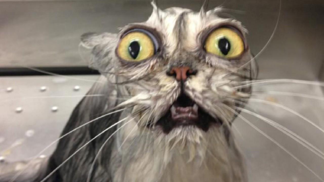 Cat картинка
