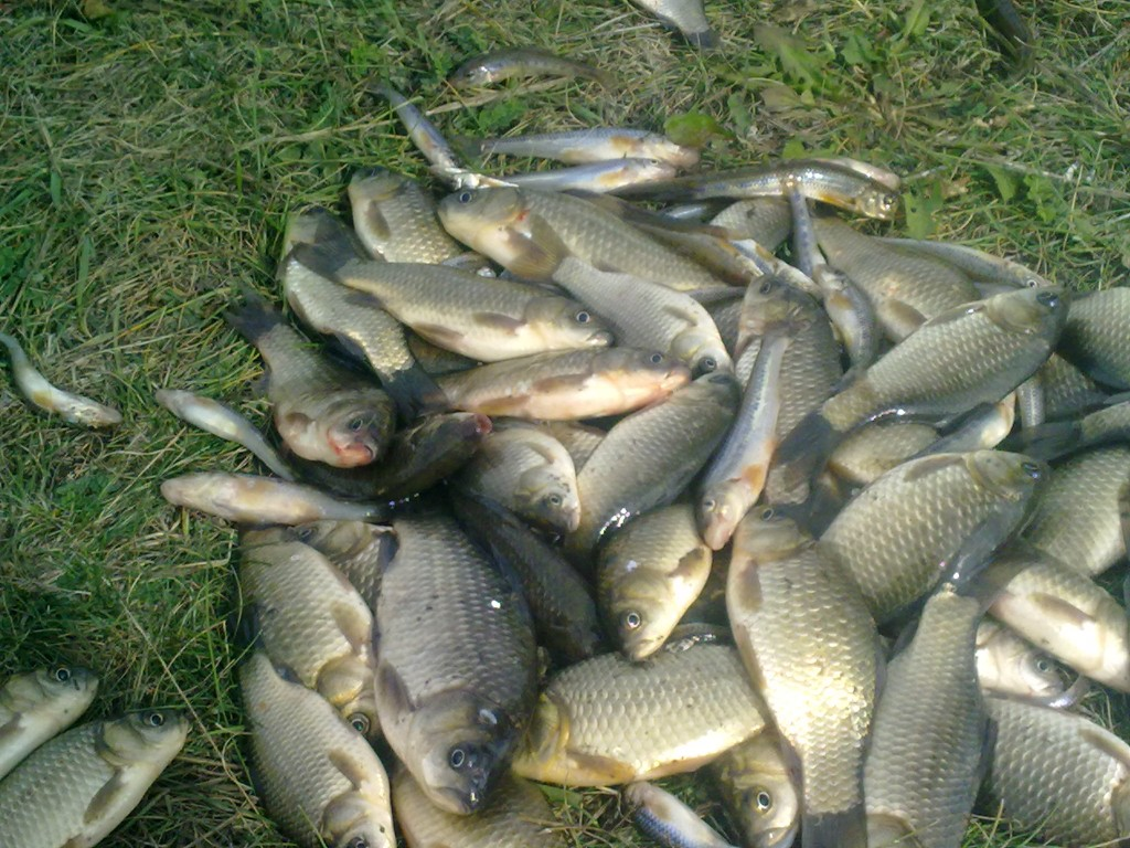 рыбалка в актаныше