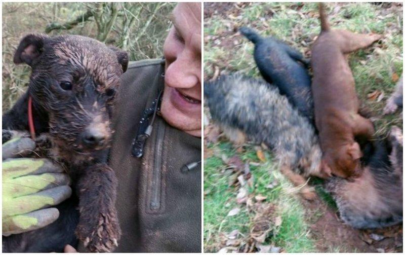 Британского охотника приговорили к тюрьме после того, как его собаки загрызли барсука
