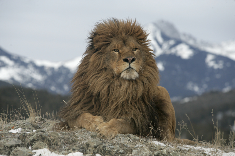 https://www.theactivetimes.com/sites/default/files/uploads/e/extinct%202%20barbary%20lion.jpg