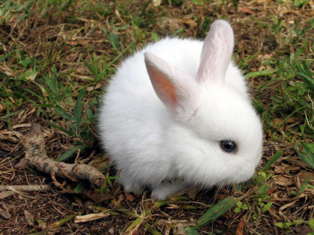Олег Дрожжин: 'Зарабатываю на кроликах полтора миллиона рублей в год'