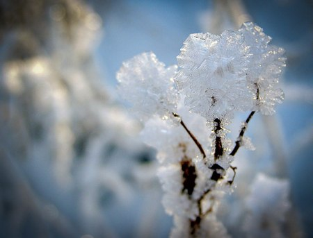 Белый цветок. PR