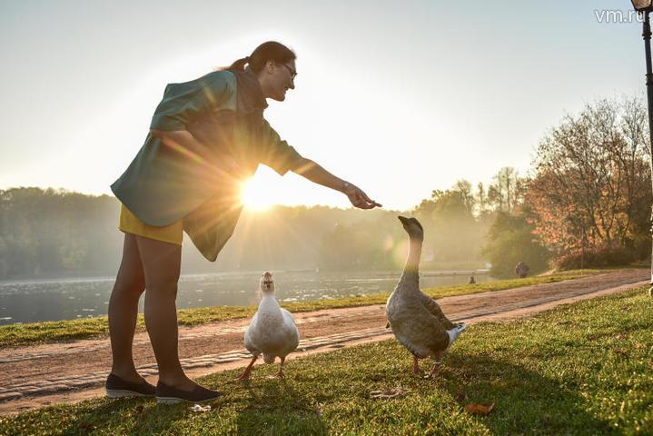 Экологи просят горожан помогать перелетным птицам